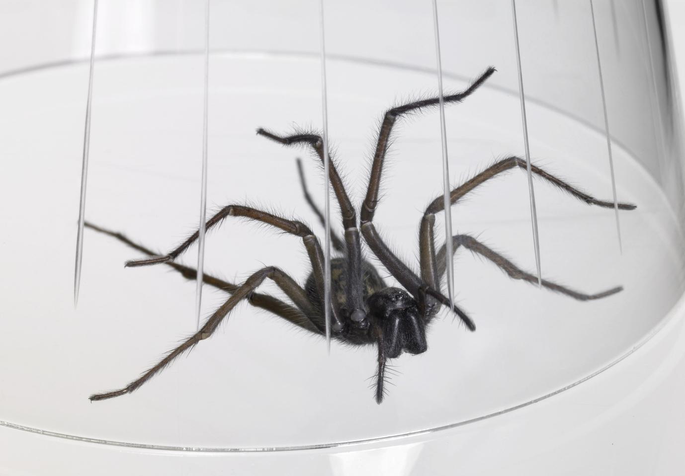 spinnenfalle selber machen lebendfalle f r spinnen. Black Bedroom Furniture Sets. Home Design Ideas