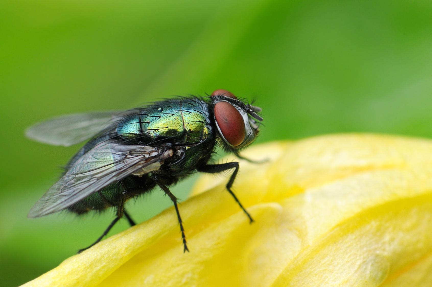 Fliegen aus der wohnung fernhalten hausmittel for Fliegen hausmittel