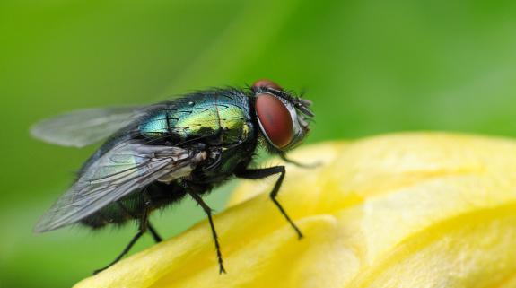Wohnung fliegen Kleine Fliegen